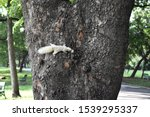 Little White Squirrel Clinging...