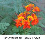 Red Orange And Yellow Blossoms...
