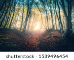 Path in beautiful forest in fog at sunrise in autumn. Colorful landscape with enchanted trees with orange and red leaves. Scenery with trail in dreamy foggy forest. Fall colors in october. Nature - stock photo