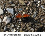 The Fiery Hairy Red Orange And...