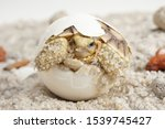 Stock photo africa spurred tortoise are born naturally tortoise hatching from egg cute portrait of baby 1539745427