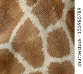 Genuine Leather Skin Of Giraff...