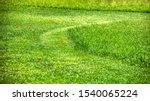 Freshly Cut Green Lawn Grass ...