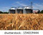 farm  wheat field with grain...