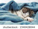 Stock photo adorable little kitten sleeping on soft plaid 1540428044
