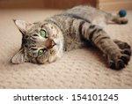 Stock photo green eyed kitten relaxing on cream carpet 154101245