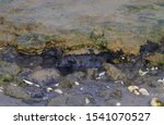 Small photo of Surface of the Dutch Wadden sea at ebb tide: microbial dissimilation of organic matter, leading to black anoxic sediments containing iron sulfide