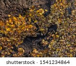 yellow autumn leaves on the... | Shutterstock . vector #1541234864