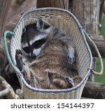 funny portrait of a sleeping... | Shutterstock . vector #154144397