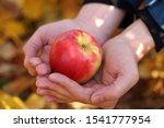 Red Apple In The Hands Of Man