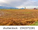 Wide View Of A Field Covered I...