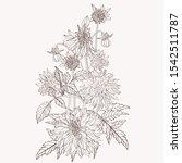 hand drawn summer vintage... | Shutterstock .eps vector #1542511787