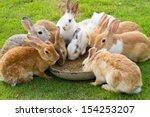 Group Of Rabbits Eating Food I...
