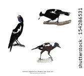 australian magpie   cracticus... | Shutterstock .eps vector #154286531