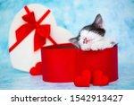 Love Day. The Kitten Lies On...
