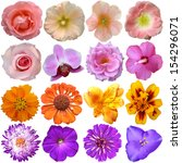 Stock photo set of colorful seasonal blooms 154296071