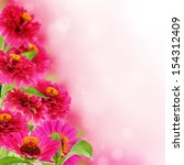 beautiful pink zinnia with a... | Shutterstock . vector #154312409