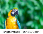 A Long Tailed Macaw Parrot With ...