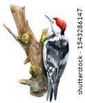 Woodpecker On An Isolated Whit...