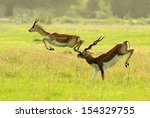 An Antelope Accident