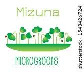 microgreens mizuna. sprouts in... | Shutterstock .eps vector #1543426724