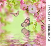 Stock photo pink flower of an oriental cherry in and butterfly 154347137