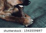 closeup of a brown chihuahua...   Shutterstock . vector #1543559897