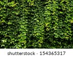 Wall Covered By Vegetation. Ivy ...