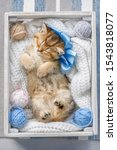 Stock photo little striped kitten sleeping in a box with balls of yarn 1543818077