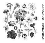 botanical graphics  collection... | Shutterstock .eps vector #1543903244