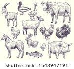 Hand Drawn Farm Animals And...