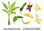 banana plant vector illustrated ...   Shutterstock .eps vector #1544324384
