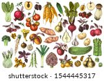 hand drawn colorful fruits and... | Shutterstock .eps vector #1544445317