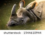Dirty rhino in the muddy water...