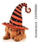Cute Puppy Wearing A Halloween...