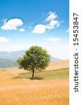 lonely tree on the wheat field... | Shutterstock . vector #15453847