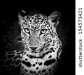 black and white leopard portrait | Shutterstock . vector #154573421
