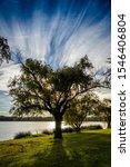 Tree On Lake Monger Perth