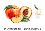 Watercolor Peach. Botanical...