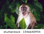 Surprised funny monkey with...