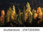 Autumn Landscape In Val Di...
