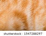 Orange Cat Fur. Tiger Pattern...