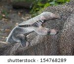 giant anteater  myrmecophaga... | Shutterstock . vector #154768289