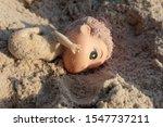 Old Doll On  The Sand Beach