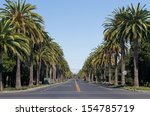 palm way   palm alley  ....   Shutterstock . vector #154785719