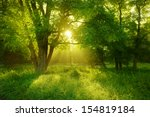 Sunlit Foggy Forest With Black...