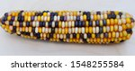 Colorful Indian Corn  Zea Mays...