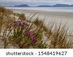Shots of the coastline from Ruakaka beach, Whangarei, Northland