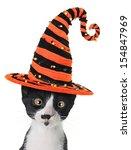 Cross Eyed Kitten Wearing A...