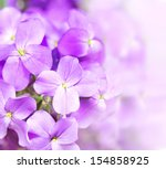 Beautiful Purple Flowers On...